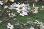 filmy_spring