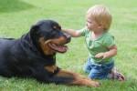 hipoalergiczni_porady_pies_kot_czy_dziecko