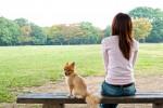 hipoalergiczni_inne_pies_do_zadan_specjalnych