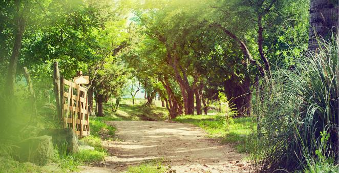 hipoalergiczni-zakwaszenie-aleja-drzewa