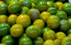 hipoalergiczni-zakwaszenie-limonki