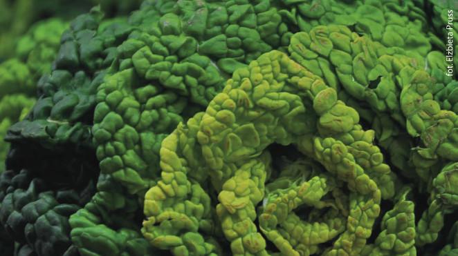 hipoalergiczni-dr-voll-kapusta-włoska