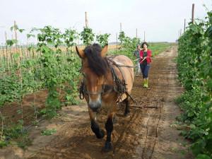 hipoalergiczni_ogrod_szambala_koń