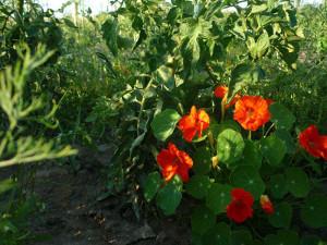 hipoalergiczni_ogrod_szambala_kwiaty