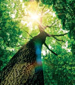 hipoalergiczni_Dania_natura_drzewo