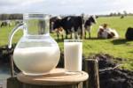 hipoalergiczni-mleko-fakty-mity