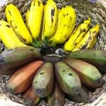 hipoalergiczni-happy-evolution-2018-targi-Organic-and-Natural-Dubaj-floor-plan-banany