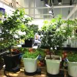 hipoalergiczni-happy-evolution-2018-targi-Organic-and-Natural-Dubaj-floor-plan-sadzonki