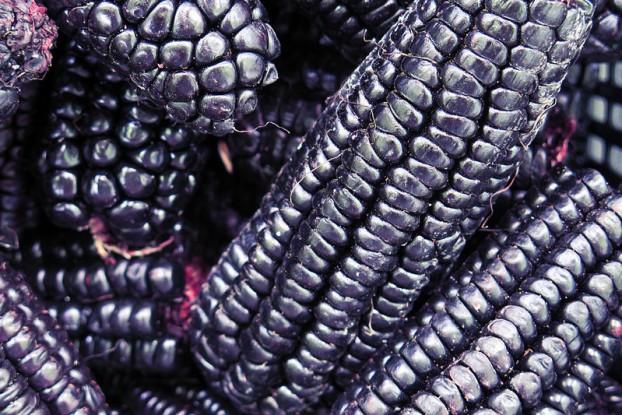 40669328 - pile of peruvian purple corn background