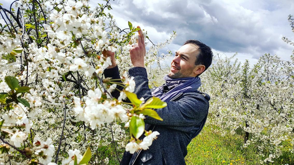 hipoalergiczni-cherry-tree-justyna-piotr-muzyka-tree