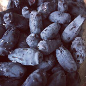hipoalergiczni-polskie-super-owoce-jagoda