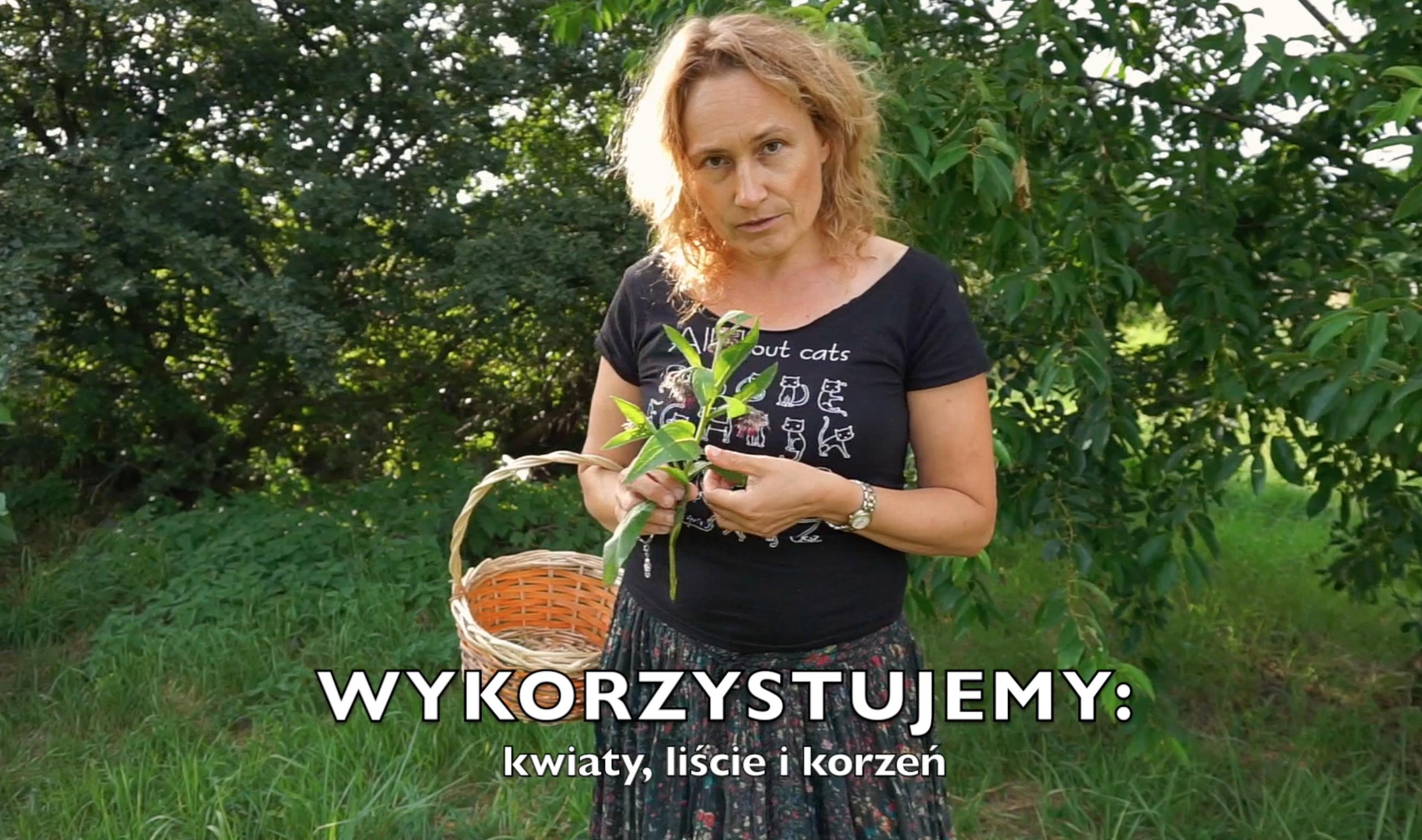 hipoalergiczni-dobre-zioło-żywokost-lekarski-marzena-andrzejewska