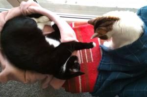 happy-evolution-hipoalergiczni-anna-zalewska-koty