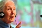 Auftaktpressekonferenz BIOFACH und VIVANESS Dr. Jane Goodall