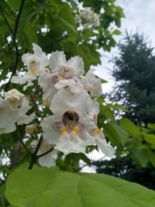 Pszczoła na kwiecie