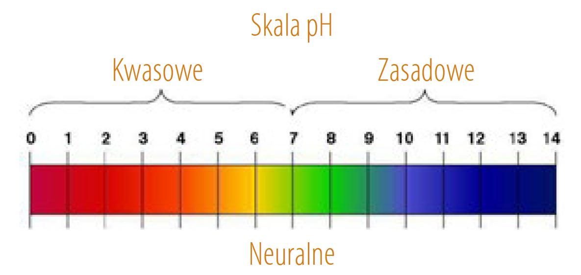 hipoalergiczni-candida-cz-2-Miroslaw-Mastej-6