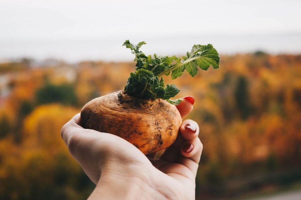 Czy w warzywach są metale ciężkie? - magazyn Hipoalergiczni