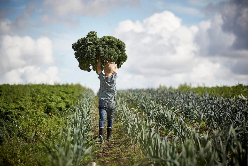 Duńscy rolnicy dumni z upraw organicznych lepszych dla zdrowia, planety i ekonomii - Hipoalergiczni.pl